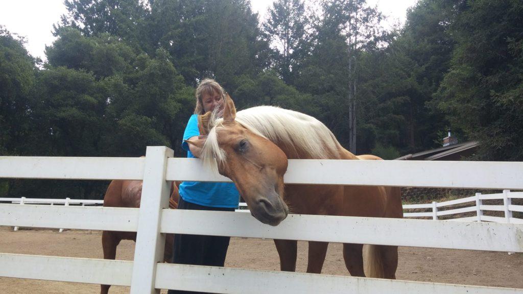 Horse for Adoption Maria